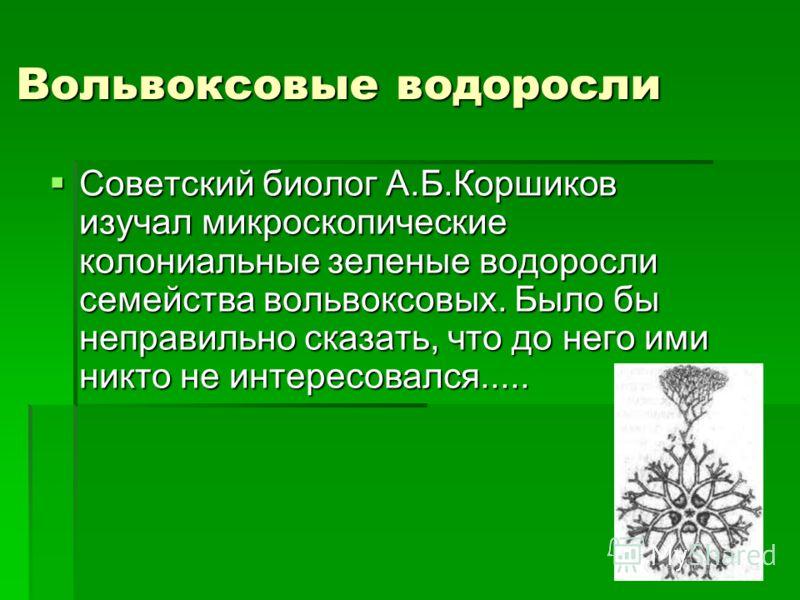 Вольвоксовые водоросли Советский биолог А.Б.Коршиков изучал микроскопические колониальные зеленые водоросли семейства вольвоксовых. Было бы неправильно сказать, что до него ими никто не интересовался..... Советский биолог А.Б.Коршиков изучал микроско