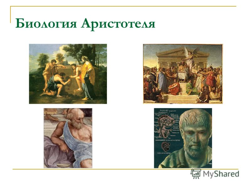 Биология Аристотеля
