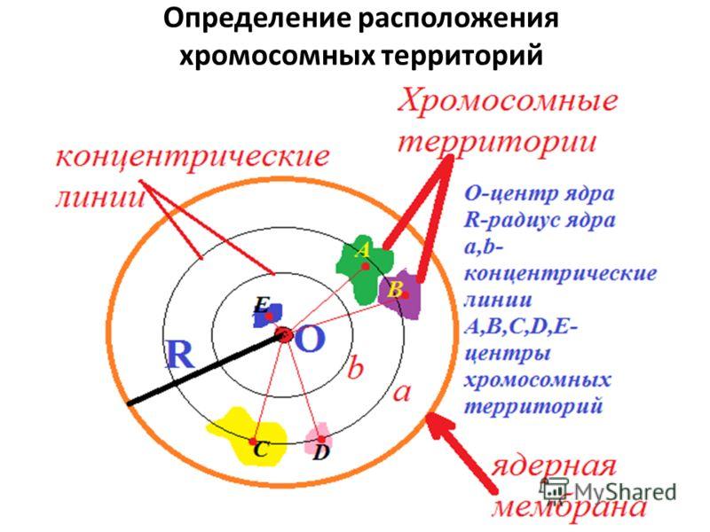 Определение расположения хромосомных территорий
