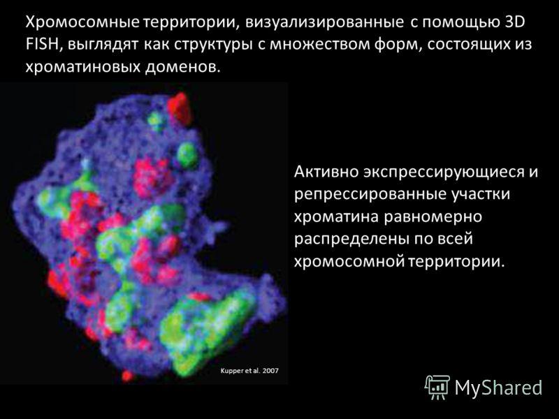 Kupper et al. 2007 Хромосомные территории, визуализированные с помощью 3D FISH, выглядят как структуры с множеством форм, состоящих из хроматиновых доменов. Активно экспрессирующиеся и репрессированные участки хроматина равномерно распределены по все