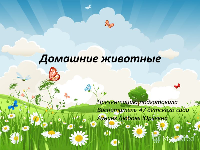 Домашние животные Презентацию подготовила Воспитатель 47 детского сада Аунинг Любовь Юрьевна