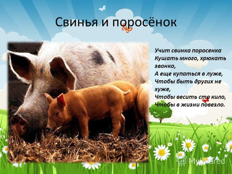 Свинья и поросёнок Учит свинка поросенка Кушать много, хрюкать звонко, А еще купаться в луже, Чтобы быть других не хуже, Чтобы весить сто кило, Чтобы в жизни повезло.