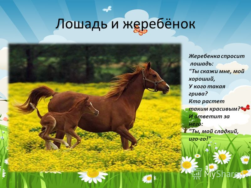 Лошадь и жеребёнок Жеребенка спросит лошадь: Ты скажи мне, мой хороший, У кого такая грива? Кто растет таким красивым? И ответит за него: Ты, мой сладкий, иго-го!