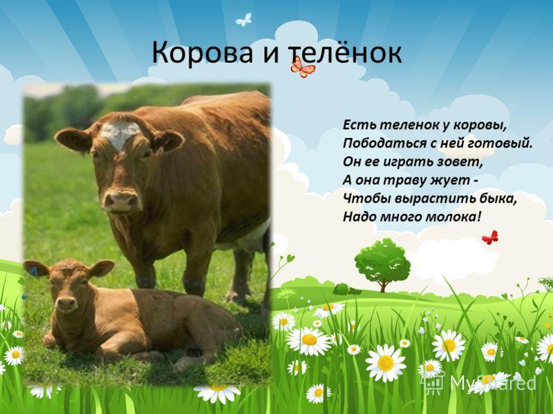 Корова и телёнок Есть теленок у коровы, Пободаться с ней готовый. Он ее играть зовет, А она траву жует - Чтобы вырастить быка, Надо много молока!