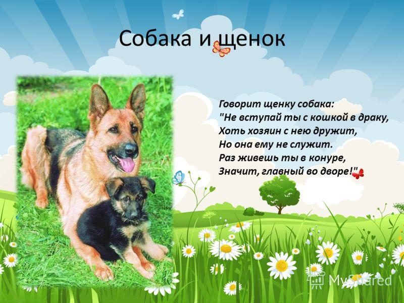 Собака и щенок Говорит щенку собака: Не вступай ты с кошкой в драку, Хоть хозяин с нею дружит, Но она ему не служит. Раз живешь ты в конуре, Значит, главный во дворе!