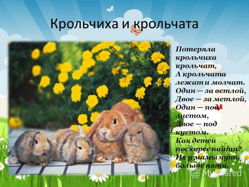 Крольчиха и крольчата Потеряла крольчиха крольчат, А крольчата лежат и молчат. Один за ветлой, Двое за метлой, Один под листом, Двое под кустом. Как детей поскорее найти? Их у мамы чуть больше пяти.