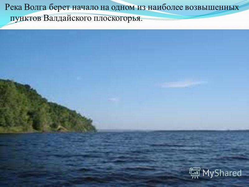 Река Волга берет начало на одном из наиболее возвышенных пунктов Валдайского плоскогорья.