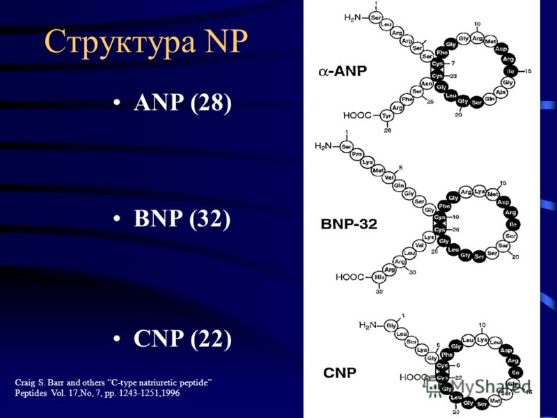 Структура NP ANP (28) BNP (32) CNP (22) Craig S. Barr and others C-type natriuretic peptide Peptides Vol. 17,No, 7, pp. 1243-1251,1996
