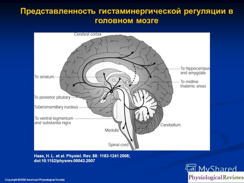 Copyright ©2008 American Physiological Society Haas, H. L. et al. Physiol. Rev. 88: 1183-1241 2008; doi:10.1152/physrev.00043.2007 Представленность гистаминергической регуляции в головном мозге