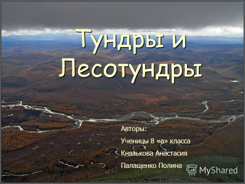 Тундры и Лесотундры Авторы: Ученицы 8 «а» класса Князькова Анастасия Палащенко Полина