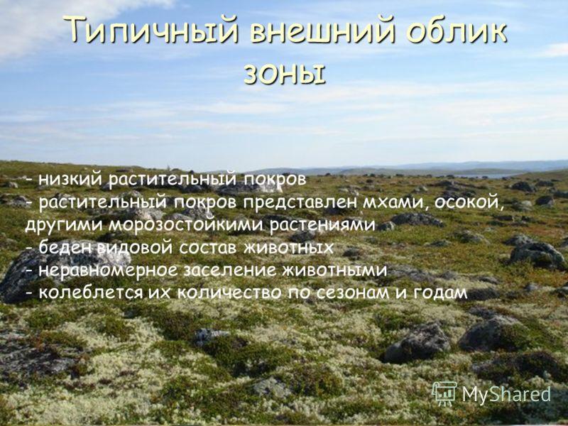 Название происходит из саамского языка и означает «мёртвая земля». - безлесное пространство - низкий растительный покров - растительный покров представлен мхами, осокой, другими морозостойкими растениями - беден видовой состав животных - неравномерно