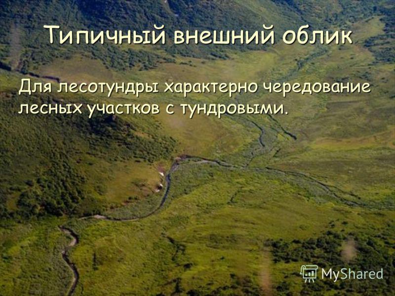 Типичный внешний облик Для лесотундры характерно чередование лесных участков с тундровыми.