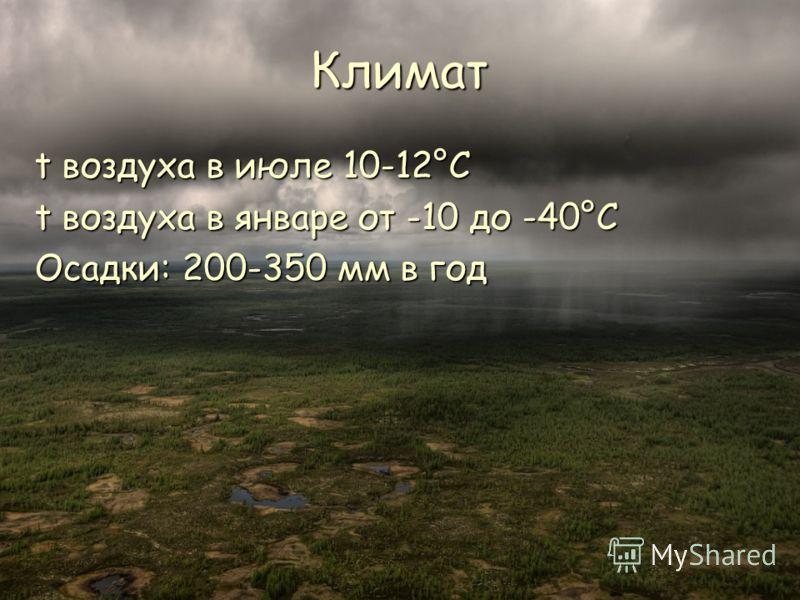 Климат t воздуха в июле 10-12°C t воздуха в январе от -10 до -40°C Осадки: 200-350 мм в год