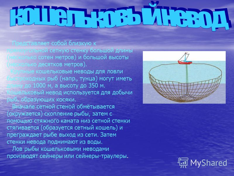 Представляет собой близкую к прямоугольной сетную стенку большой длины (несколько сотен метров) и большой высоты (несколько десятков метров). Крупные кошельковые неводы для ловли быстроходных рыб (напр., тунца) могут иметь длину до 1000 м, а высоту д