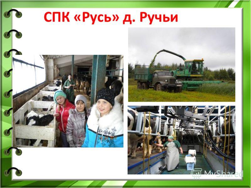 СПК «Русь» д. Ручьи
