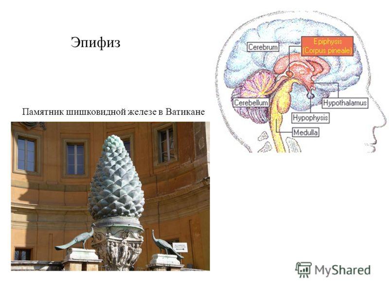 Эпифиз Памятник шишковидной железе в Ватикане