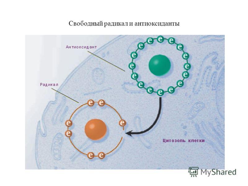 Свободный радикал и антиоксиданты