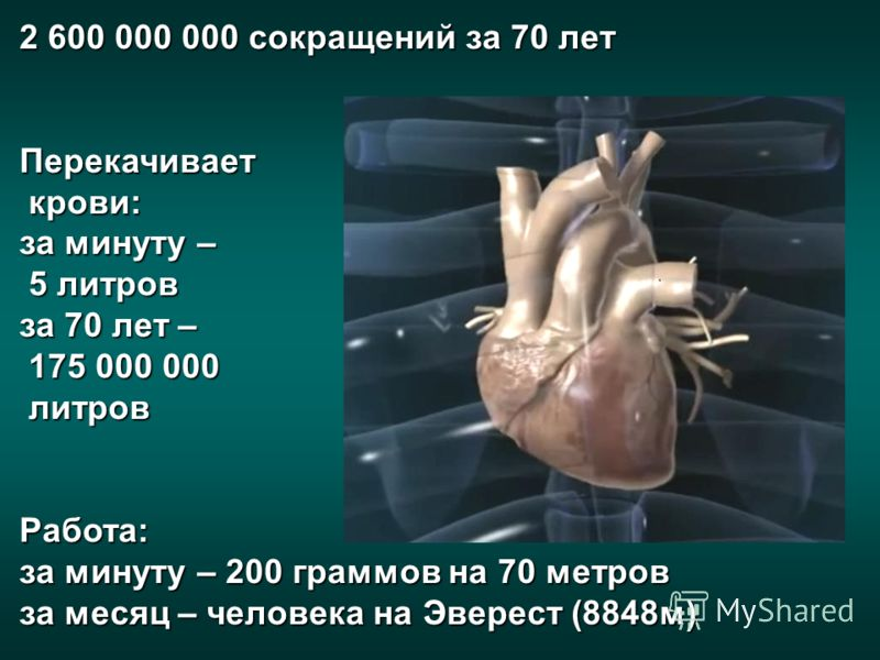 2 600 000 000 сокращений за 70 лет Перекачивает крови: крови: за минуту – 5 литров 5 литров за 70 лет – 175 000 000 175 000 000 литров литров Работа: за минуту – 200 граммов на 70 метров за месяц – человека на Эверест (8848 м)