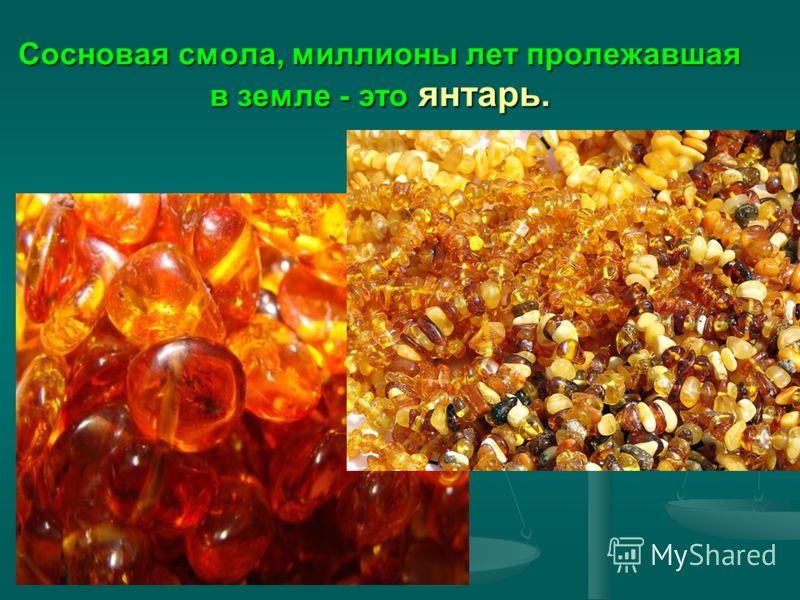 Сосновая смола, миллионы лет пролежавшая в земле - это янтарь.