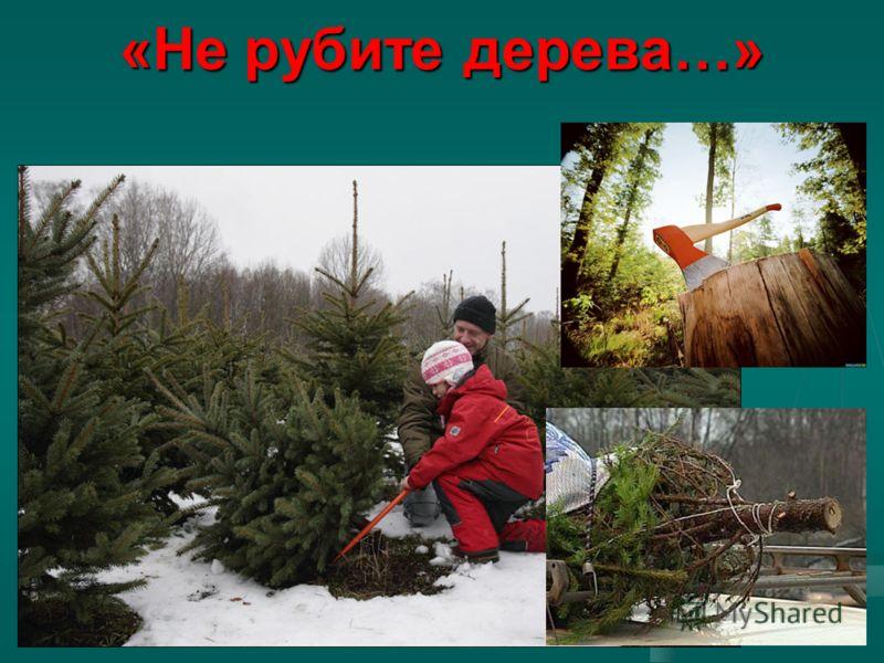 «Не рубите дерева…»