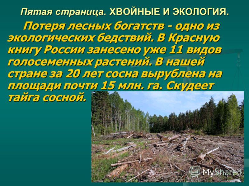 Пятая страница. ХВОЙНЫЕ И ЭКОЛОГИЯ. Потеря лесных богатств - одно из экологических бедствий. В Красную книгу России занесено уже 11 видов голосеменных растений. В нашей стране за 20 лет сосна вырублена на площади почти 15 млн. га. Скудеет тайга сосно