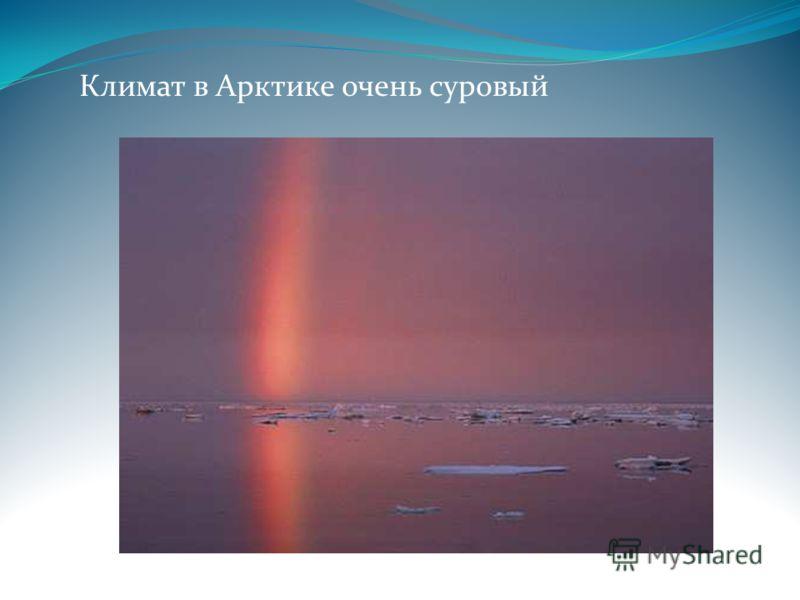 Климат в Арктике очень суровый