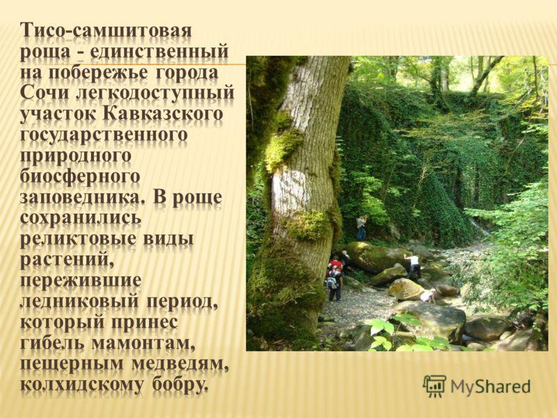 Тарханкут на карте Крыма фото и отзывы как добраться