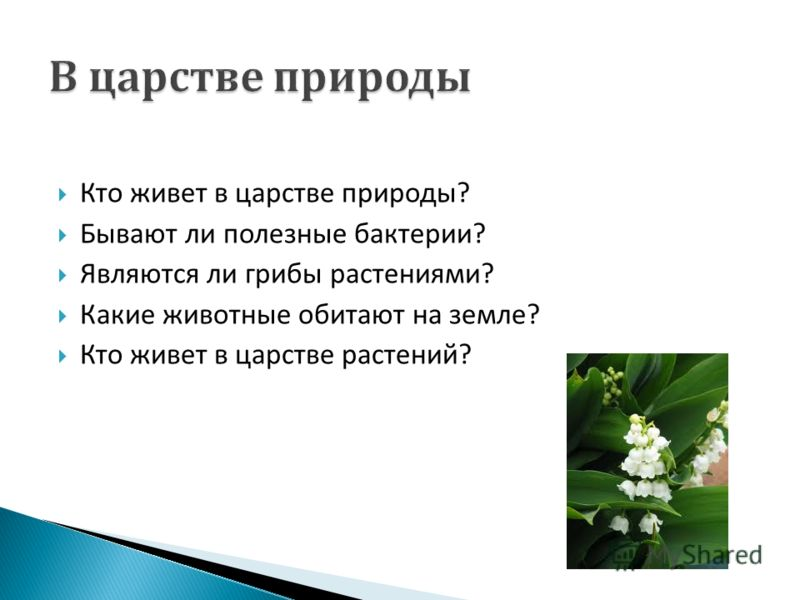 Кто живет в царстве природы ? Бывают ли полезные бактерии ? Являются ли грибы растениями ? Какие животные обитают на земле ? Кто живет в царстве растений ?