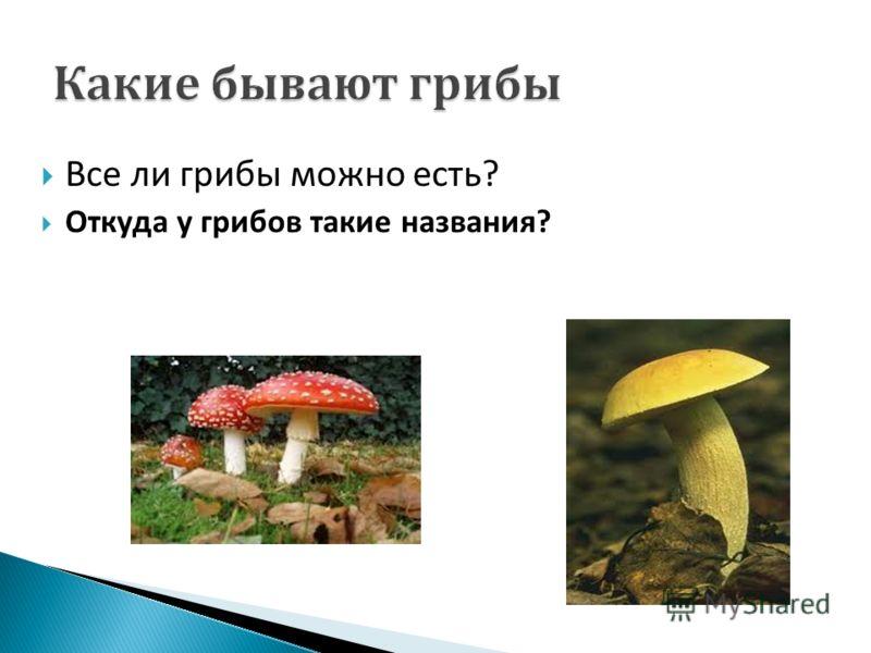 Все ли грибы можно есть ? Откуда у грибов такие названия ?