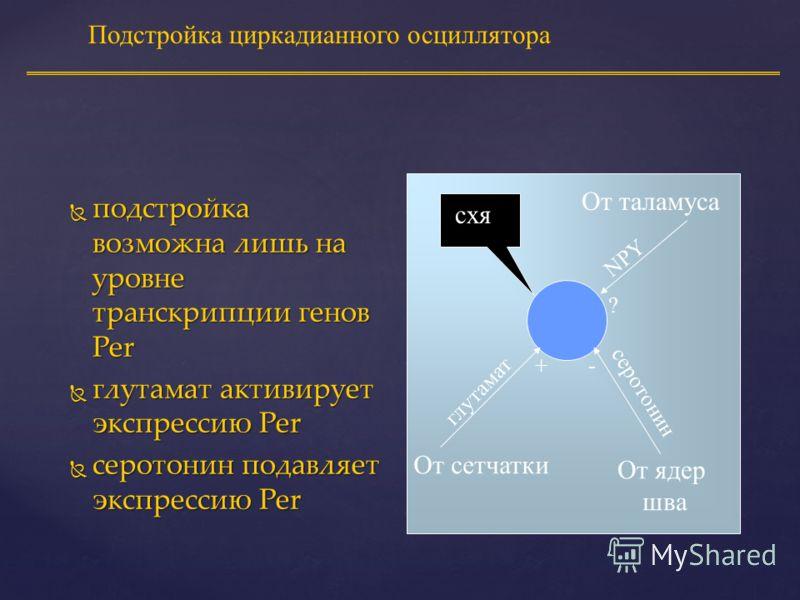 Механизм подстройки осциллятора NMDA глутамат... Ca 2+ in повышается Фосфорилированный CREB Активация транскрипции C-fos C-Fos Per Активация транскрипции Перезапуск ритма Фосфорилировa- ние CREB В ядро