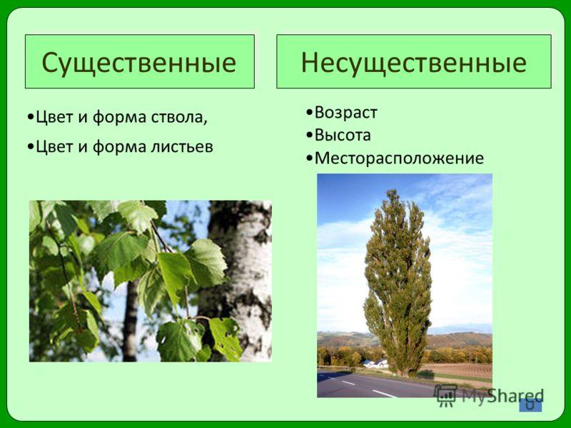 Существенные Несущественные Цвет и форма ствола, Цвет и форма листьев Возраст Высота Месторасположение