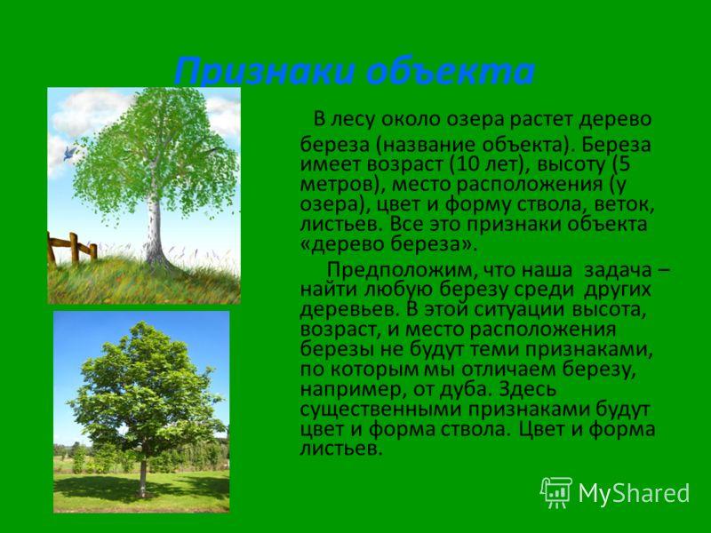 Признаки объекта В лесу около озера растет дерево береза (название объекта). Береза имеет возраст (10 лет), высоту (5 метров), место расположения (у озера), цвет и форму ствола, веток, листьев. Все это признаки объекта «дерево береза». Предположим, ч