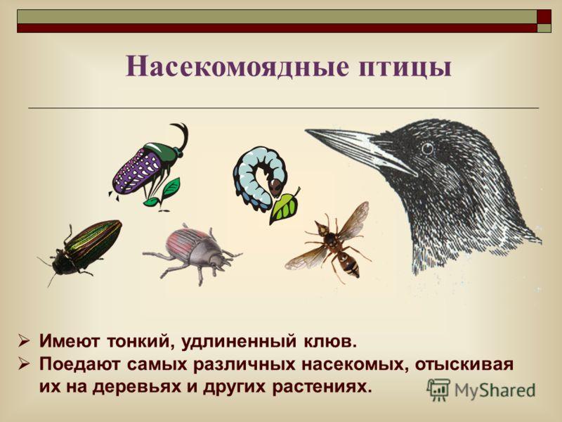 Имеют тонкий, удлиненный клюв. Поедают самых различных насекомых, отыскивая их на деревьях и других растениях. Насекомоядные птицы