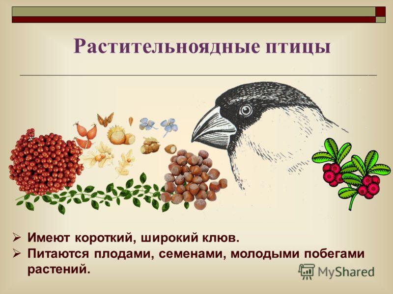 Имеют короткий, широкий клюв. Питаются плодами, семенами, молодыми побегами растений. Растительноядные птицы