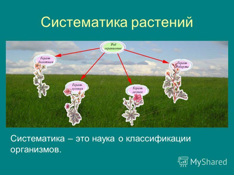 Систематика растений Систематика – это наука о классификации организмов.