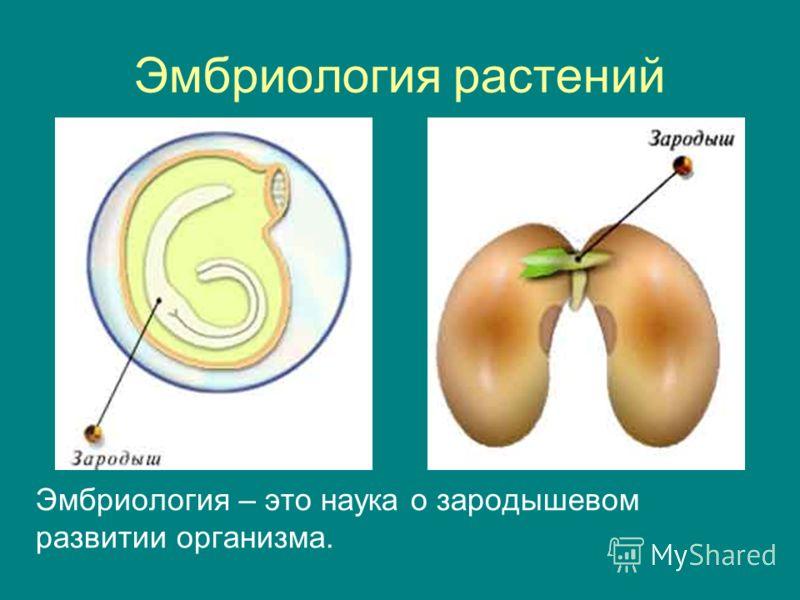 Эмбриология растений Эмбриология – это наука о зародышевом развитии организма.