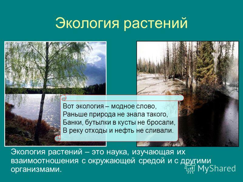 Экология растений Экология растений – это наука, изучающая их взаимоотношения с окружающей средой и с другими организмами. Вот экология – модное слово, Раньше природа не знала такого, Банки, бутылки в кусты не бросали, В реку отходы и нефть не сливал