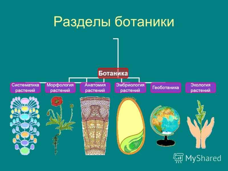 Урок 1 наука биология наука биология