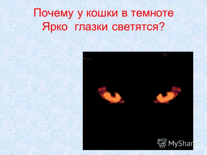 Почему у кошки в темноте Ярко глазки светятся?