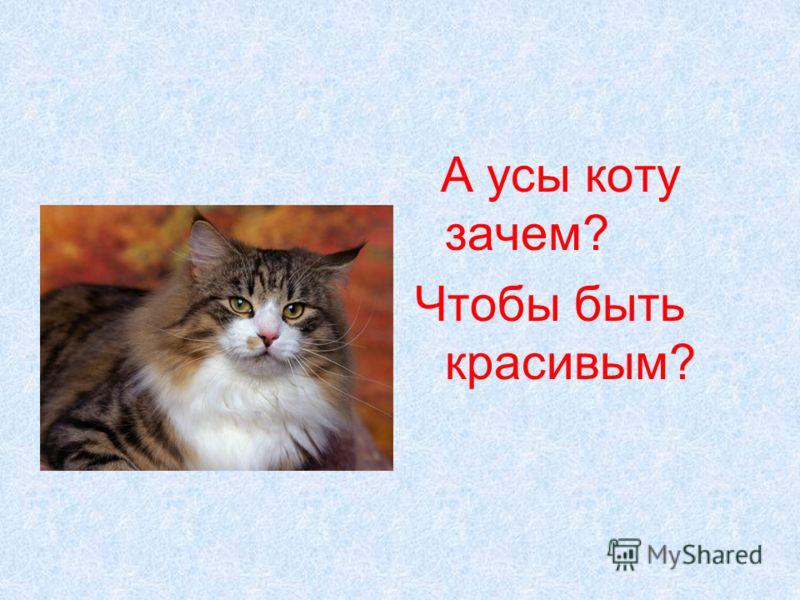 А усы коту зачем? Чтобы быть красивым?