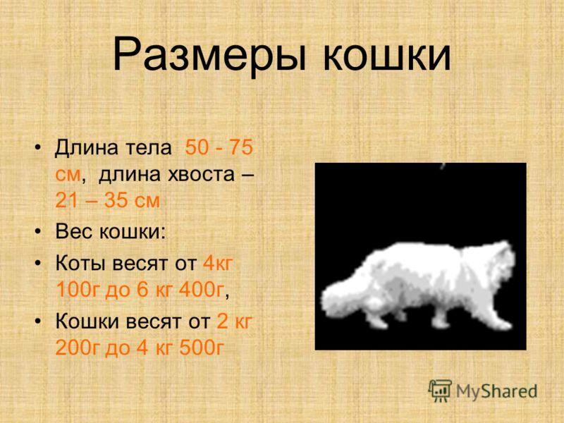 Размеры кошки Длина тела 50 - 75 см, длина хвоста – 21 – 35 см Вес кошки: Коты весят от 4 кг 100 г до 6 кг 400 г, Кошки весят от 2 кг 200 г до 4 кг 500 г