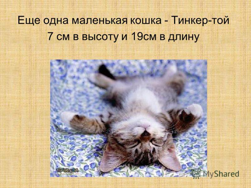 Еще одна маленькая кошка - Тинкер-той 7 см в высоту и 19 см в длину