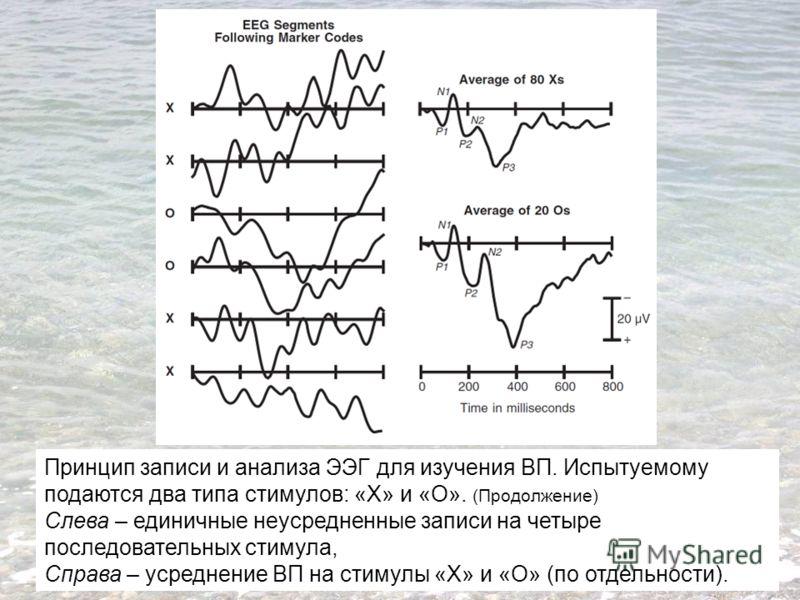 Принцип записи и анализа ЭЭГ для изучения ВП. Испытуемому подаются два типа стимулов: «Х» и «О». (Продолжение) Слева – единичные неусредненные записи на четыре последовательных стимула, Справа – усреднение ВП на стимулы «Х» и «О» (по отдельности).