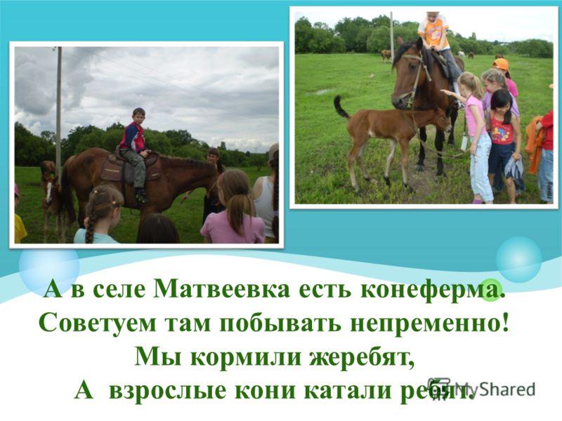 А в селе Матвеевка есть конеферма. Советуем там побывать непременно! Мы кормили жеребят, А взрослые кони катали ребят.