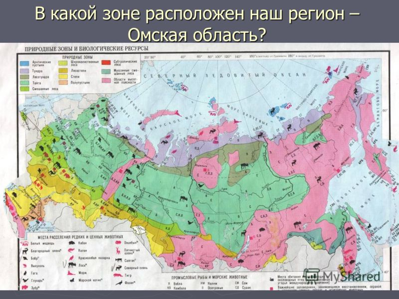 В какой зоне расположен наш регион – Омская область?