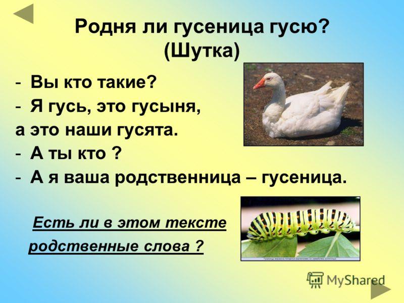 Родня ли гусеница гусю? (Шутка) -Вы кто такие? -Я гусь, это гусыня, а это наши гусята. -А ты кто ? -А я ваша родственница – гусеница. Есть ли в этом тексте родственные слова ?
