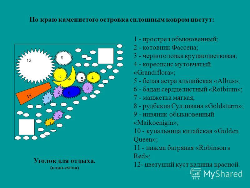 1 - прострел обыкновенный; 2 - котовник Фассена; 3 - черноголовка крупноцветковая; 4 - кореопсис мутовчатый «Grandiflora»; 5 - белая астра альпийская «Albus»; 6 - бадан сердцелистный «Rotbium»; 7 - манжетка мягкая; 8 - рудбекия Сулливана «Goldsturm»;