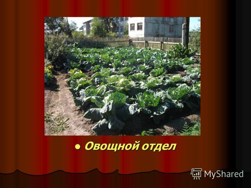 Овощной отдел Овощной отдел