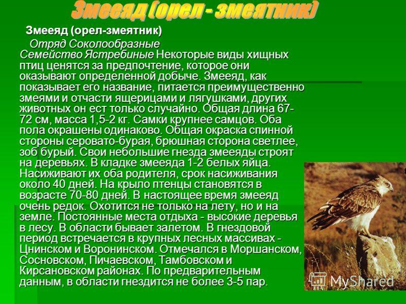 Змееяд (орел-змеятник) Змееяд (орел-змеятник) Отряд Соколообразные Семейство Ястребиные Некоторые виды хищных птиц ценятся за предпочтение, которое они оказывают определенной добыче. Змееяд, как показывает его название, питается преимущественно змеям