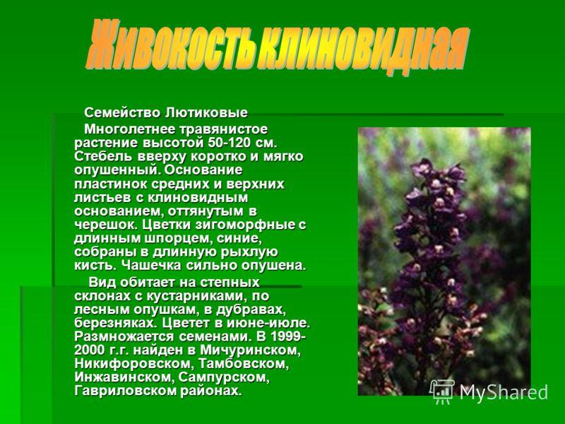 Семейство Лютиковые Семейство Лютиковые Многолетнее травянистое растение высотой 50-120 см. Стебель вверху коротко и мягко опушенный. Основание пластинок средних и верхних листьев с клиновидным основанием, оттянутым в черешок. Цветки зигоморфные с дл